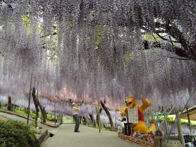 Lugares para visitar una vez en la vida el tarro de ideas for Jardines kawachi fuji