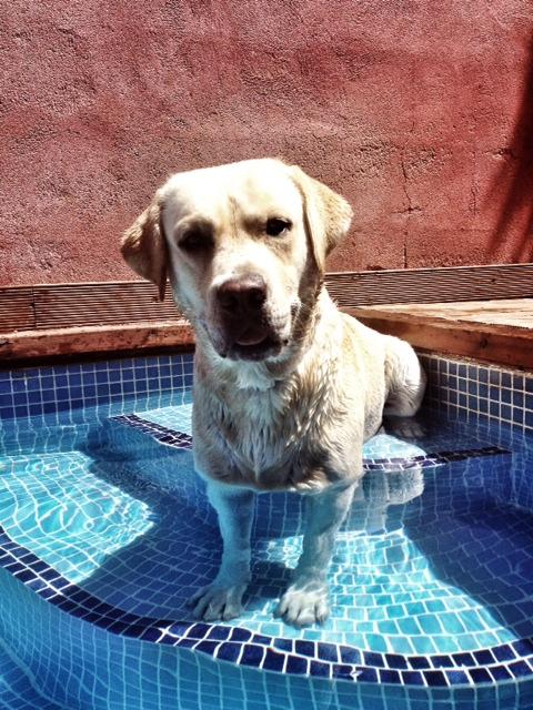 foto perro