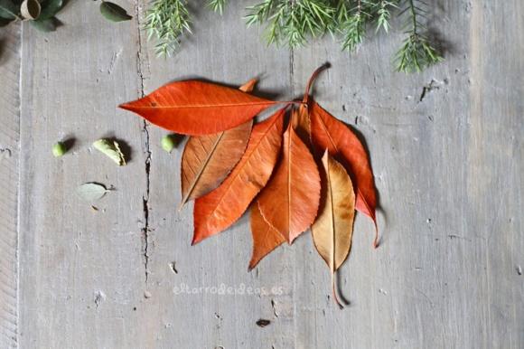 hojas del campo
